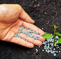 Чем подкормить цветы для обильного цветения