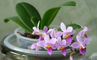 Размножение орхидей семенами в домашних условиях