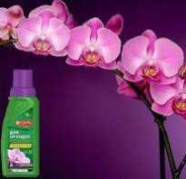 Бона форте для орхидей инструкция по применению