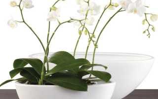 Горшки для орхидей с автополивом