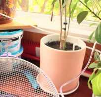 Автоматический полив комнатных растений своими руками