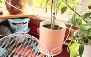 Как сделать автополив для комнатных растений