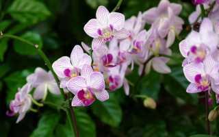 Чем полить орхидею чтобы она зацвела