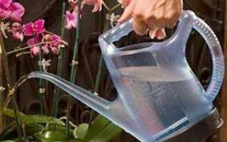 Сколько раз в неделю надо поливать орхидею