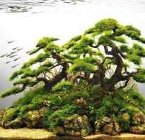 Деревья в японии