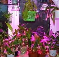 Дендробиум как заставить цвести
