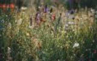 Полевые цветы и травы