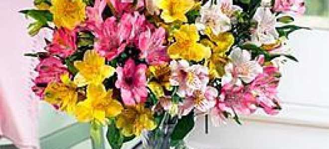 Цветок альмерия