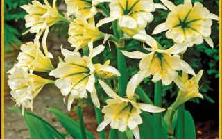 Маленькие желтые цветочки
